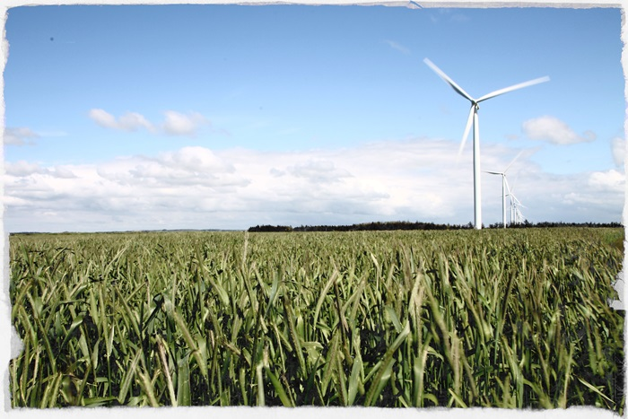 A wind turbine placed on a field consisting of grass